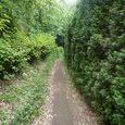 森の小路。