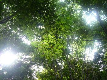 木漏れ日2。